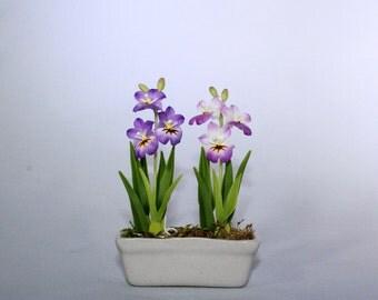 Mini Double Petunias in Ceramic Pot