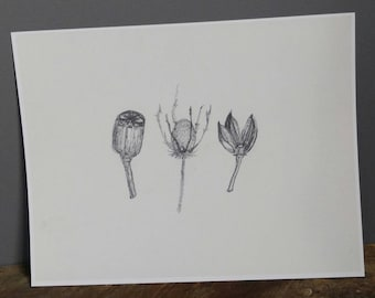 Print of original artwork black and white pencil pen botanical sketch seed pod pressed flowers dried herb kitchen home art decor office
