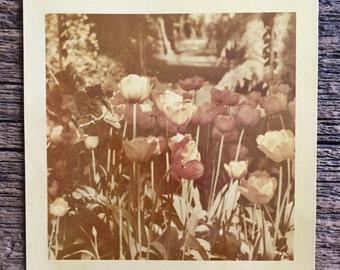 Original Vintage Color Photograph Golden Afternoon 1951