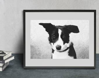 Black & White Border collie portrait  - Instant download digital print - Wall art - Photography - Poster - Home decor