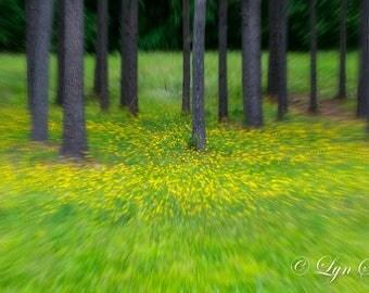 North Carolina Woods, Home Decor, Nature, Landscape, Photography, fine art, flowers, wall art, Nash county, North Carolina