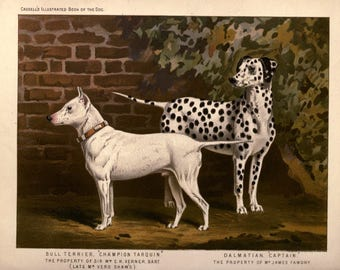 BULL TERRIER DALMATIAN Dogs Antique Chromolithograph Dog Print 1881 Vero Shaw Cassells  Company Unique Birthday Christmas Thanksgiving gift