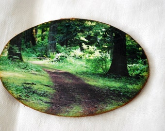 wood photo magnet, forest trail photograph