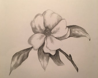 Magnolia Pencil Drawing