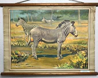 Vintage Italian Zebra School Chart