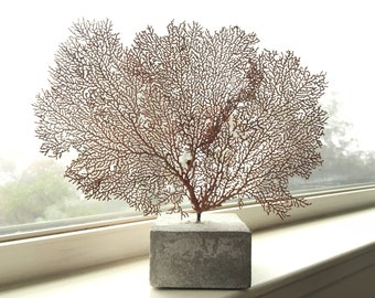 Sea Fan Sculpture - Concrete Base - Home Decor - Sea Life