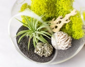 Hanging Terrarium Kit with Air Plant, Pyrite and Gypsum Desert Rose || Housewarming Gift || Small Round