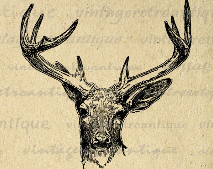 Printable Deer Artwork Antique Deer Graphic Download Deer Antlers Image Illustration Digital Vintage Clip Art Jpg Png Eps HQ 300dpi No.444