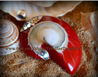 Sale Natural Nautilus shell slice/ 925 Bali silver with bright red resin back fill focal bead pendant Sacred Geometry (item NSR-1)