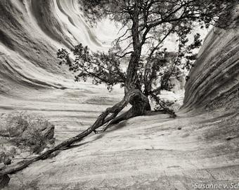 Black & White Photography, Old Tree, New Mexico, Travel Photography, Fine Art Print, Nature Photography, Ancient Tree Photo, National Park