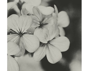 Black and White Floral Photography Monochrome Fine Art Photography Modern Living Decor Flower Print Shabby Photography Floral Wall Art Decor