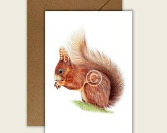 Red Squirrel Blank Animal Artist Card