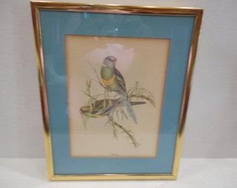 Framed Gould Bird Print