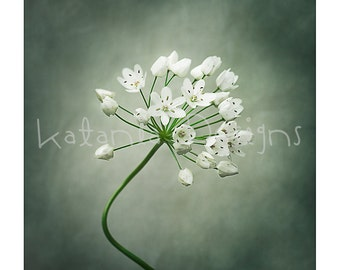 Photographic print, Allium photo print, flower photo print, fine art flower print, gift for her, gift for gardener