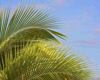 Photograph of palm tree and sky, St. Maarten, St Martin, Caribbean art, tropical decor, caribbean print, nature decor, island decor