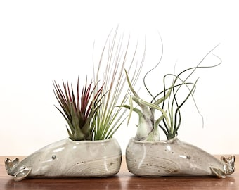 whale vase / whale air plant holder / whale bud vase / grey whale / one whale