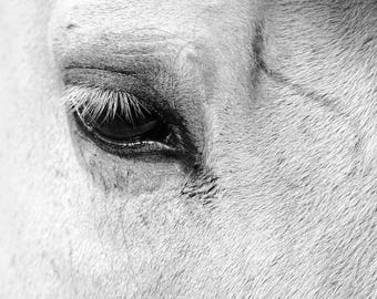 Horse Photography, Black and White Photo of Horses Eye,  Rural Western Photograph Decor Art