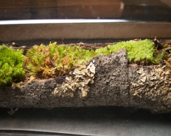 Moss log in a bottle
