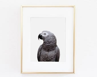 Parrot Nursery Art Print | Parrot Wall Art | Nursery Printable | Nursery Wall Art | Bird Art Print | Bird Wall Art | Bird Nursery Print |