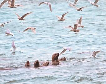 Sea Lion, Seagull Art, Spawn, Ocean Animals, Sea Life, Sea Animals, Hornby Island, British Columbia, Fish Spawn, Coastal, Wildlife Prints