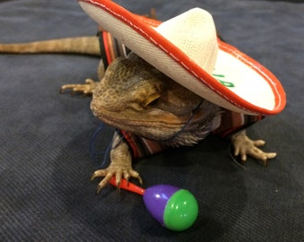 Mexican Fiesta Costume for Bearded Dragons! Two Sizes, one style.