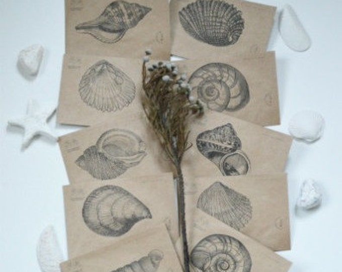 nautical set ∞ nautilus shell ∞ set of 10 envelopes ∞ inexplicable . perfect ∞ FLYER envelope ∞ will fulfil your wish ∞ magic time ∞ 2016 ∞