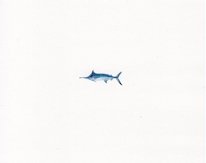 "Print of miniature painting of a Blue Marlin. 1 1/4""x1 1/4"" print of original Blue Marlin painting on 5"" square german etching paper"
