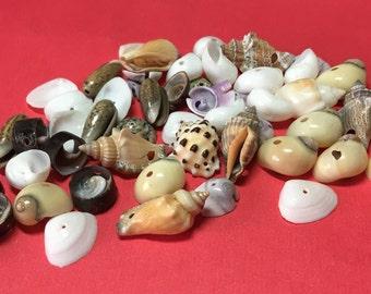 50+shells, drilled shell beads, natural shell beads medium