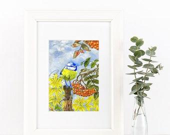 bluetit on with sorbus acuparia- Irish Wildlife Collection, Giclee Print