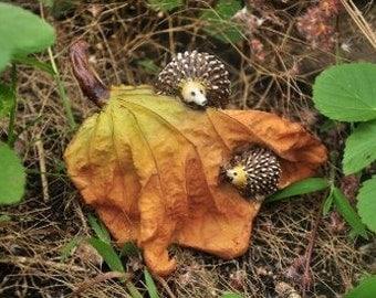 Hedgehogs Hide And Seek