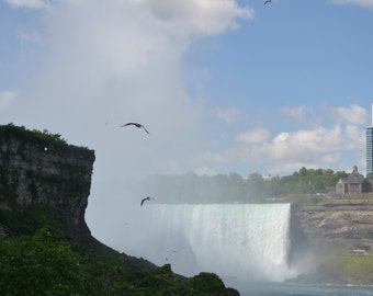 Birds Over Niagara