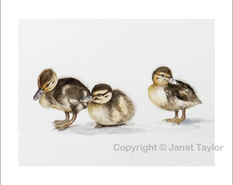 Three ducklings:   Print from an original watercolour painting by Jan Taylor.