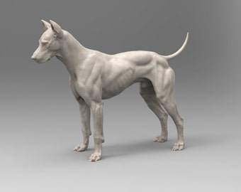 Canine Digital Model