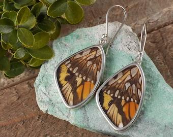 2 inch Real Butterfly Wing Earrings in Sterling Silver - Earrings, Real Butterfly Earrings, Butterfly Jewelry, Butterfly Wing Jewelry J1171