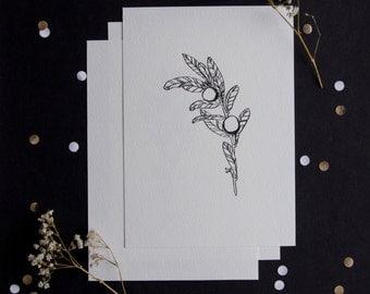 3 pack - inkjet botanical prints - black and white - A6 - monotone