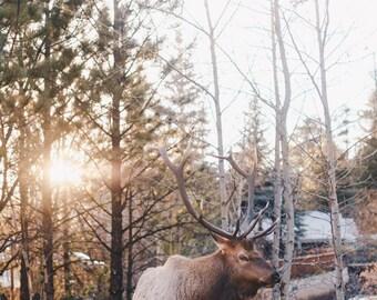 Denver, Colorado, Estes Park, Rustic, Elk, Sun, Landscape, Vintage-Inspired, Fine Art, Photograph, Wall Art, Print, Travel Photograph