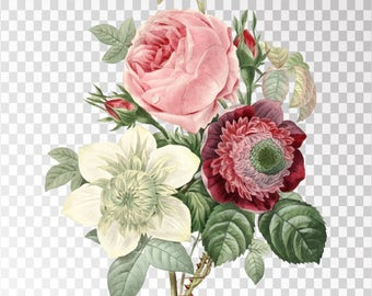 "Rose Anemone Clip Art Flower - 16""x20"" Transparent Background Clipart PNG and JPG Illustration Instant Download"