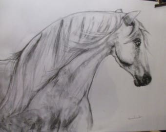 original charcoal sketch  grey horse head