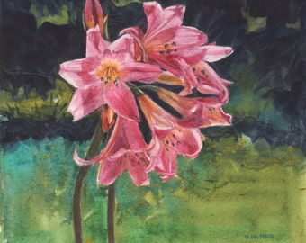 Pink Belladonna Lilies with a dark forest background - Floral Watercolor Art Belinda DelPesco