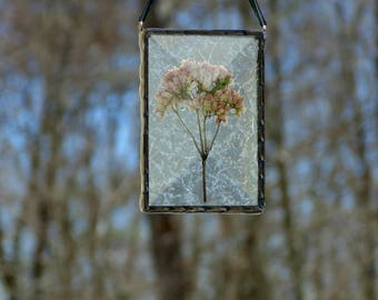 Pressed flower suncatcher, flower terrarium, stained glass copper foil, wildflower ornament, glass art, pink flower, dried flowers