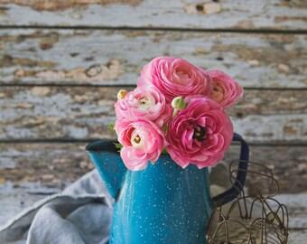 Ranunculus ~ 8x10 photo print
