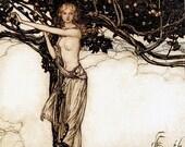 Freya,  Arthur Rackham, Vinatge Art Print