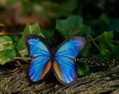 Blue Butterfly Hair Barrette in Vegan Leather