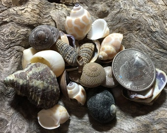 Small Sea Shell Mix Supplies for Arts and Crafts, Home Decor, Collections/ seashells Mini shells Beach wedding table confetti decor accents