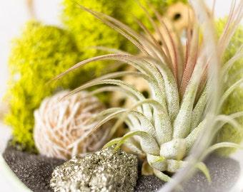 DIY Terrarium Kit || Desert Rose + Pyrite Air Plant Terrarium Kit || Neutral Decor || Natural Modern || Gifts for Her || Hanging Terrarium