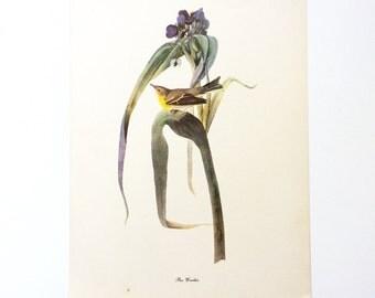 """Vintage John James Audubon Bird Print / Pine Warbler / Vintage Natural Science Home Decor / Art Illustration / Great for Framing / 9"""" x 12"""""""
