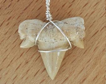 Shark Tooth Pendant
