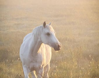 White Horse Golden Light Fine Art Photography Soft dreamy romantic equestrian Art misty foggy magical ranch house chic country home decor