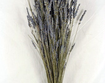 "Dried Lavender Bunch 120 Stems French, Fragrant Bundle 18"" Tall"