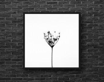 Minimalist Photo - Botanical Print - Herb Photo - Plants - Square Photo - Black White Wall Art - Botanical Wall Decor - Living Room Decor